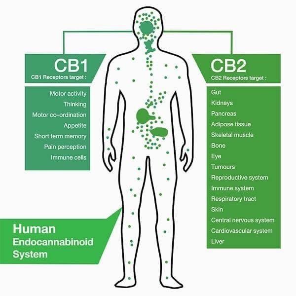 CBD receptor sites